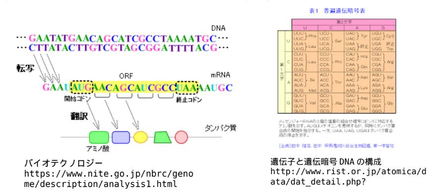 遺伝子と遺伝暗号